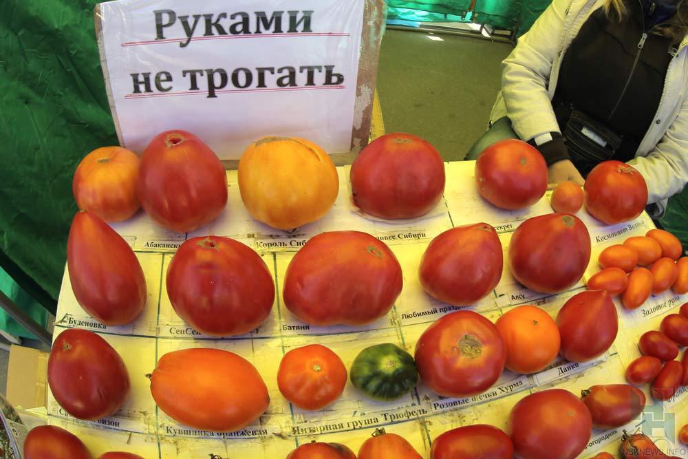 Семена томатов для новосибирска
