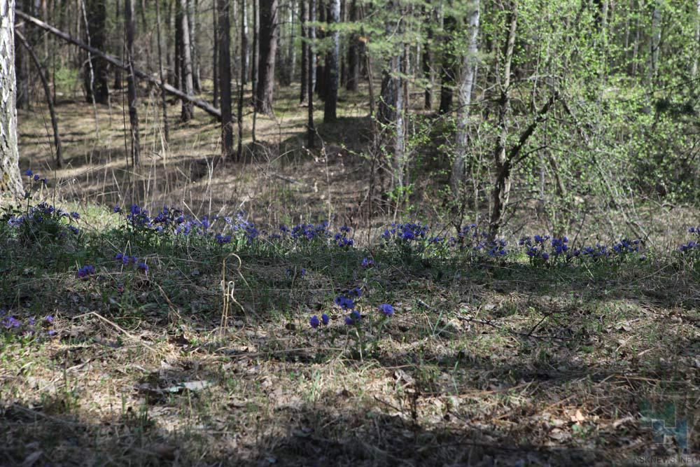 Две женщины заблудились влесах Новосибирской области насутки