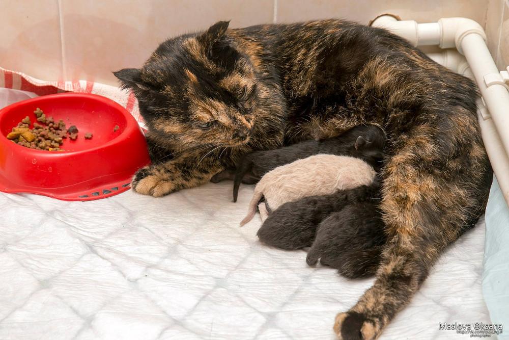 Беременная кошка сама пришла рожать вветклинику вНовосибирске
