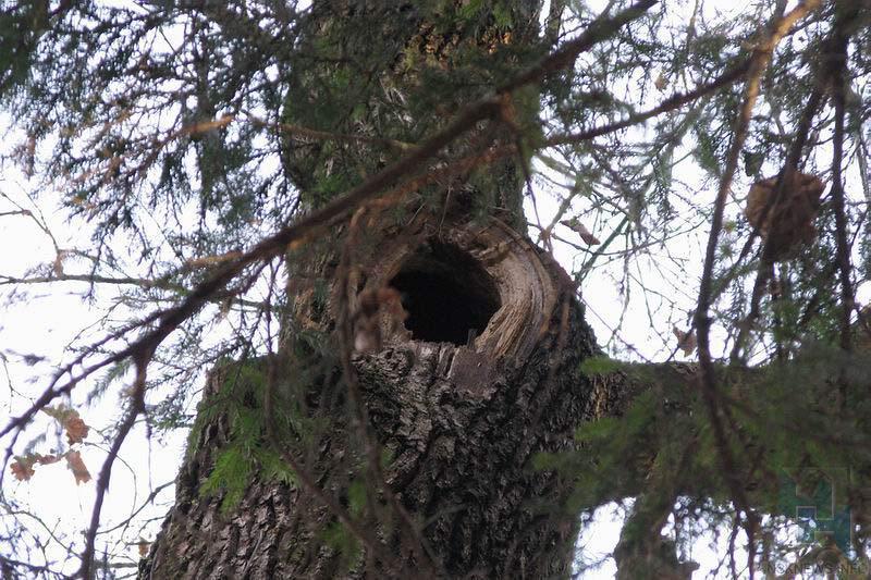 Новосибирские наркоторговцы прятали кокаин вдупле дерева