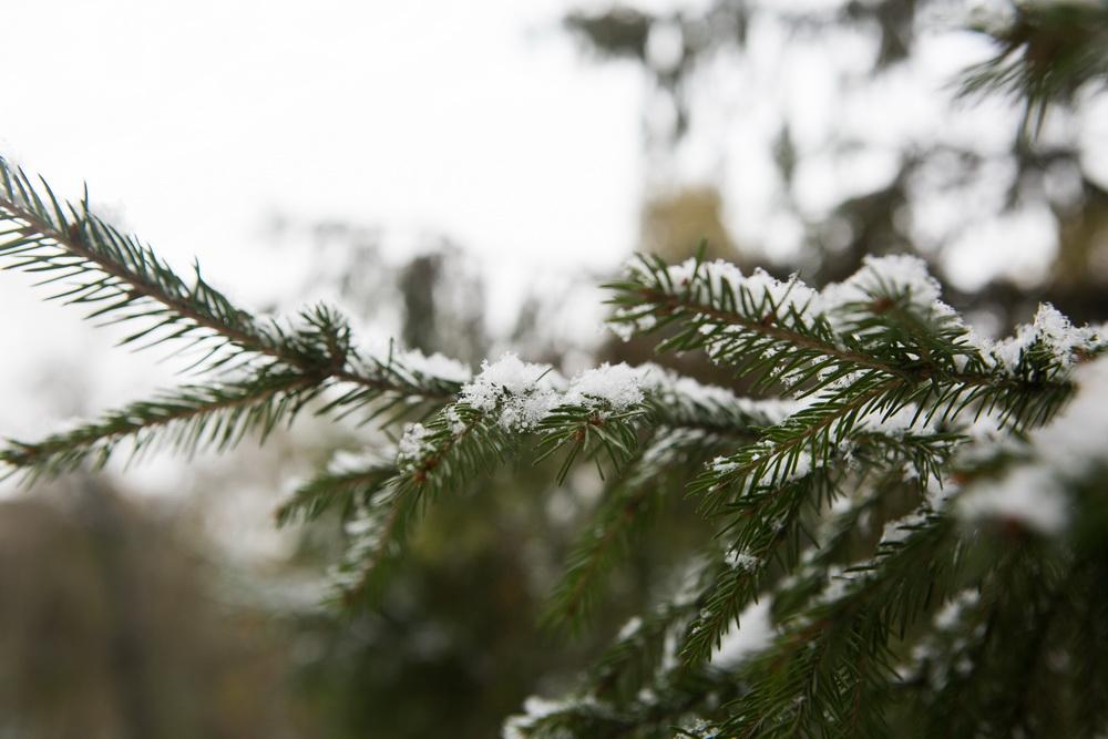 Морозы будут крепчать напраздничных выходных