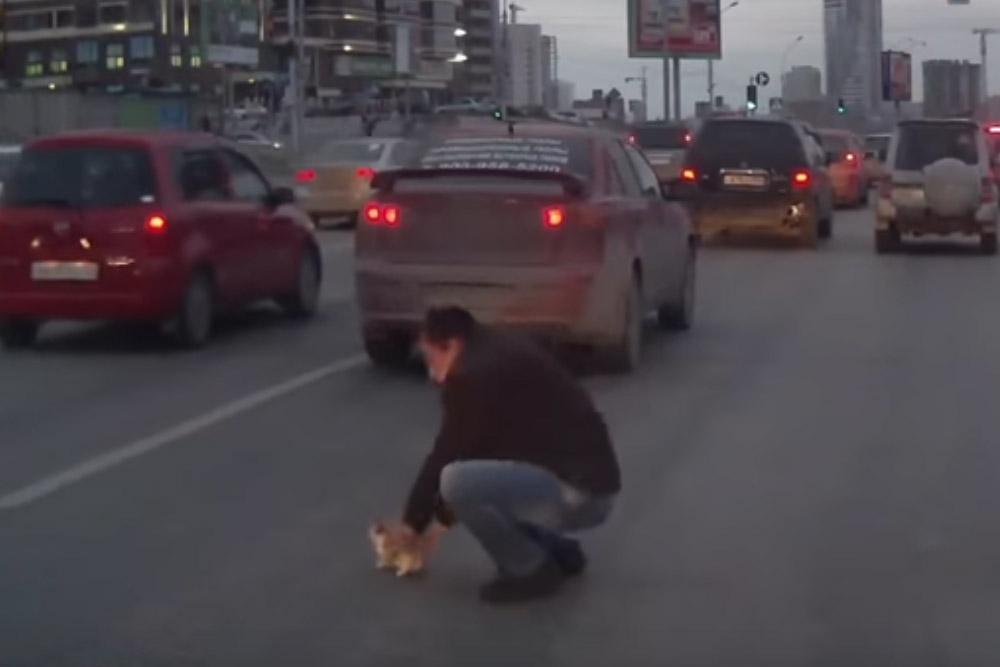 ВНовосибирске шофёр спас котенка из-под колес другого автомобиля