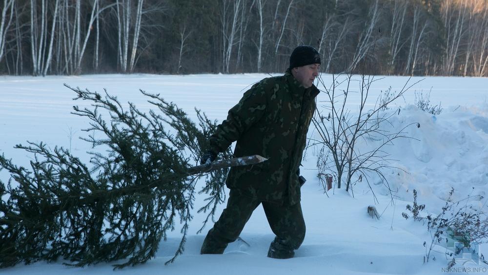 Влесах под Новосибирском установили камеры для охраны хвойных деревьев