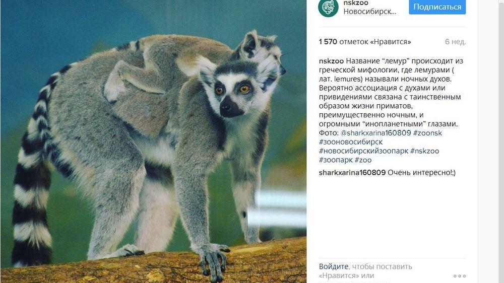 Вновосибирском зоопарке родились сервалята икенгуренок