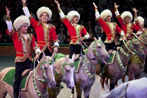 В Новосибирском цирке артист упал с лошади во время выступления