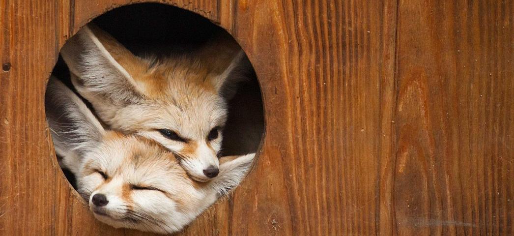 Новосибирский зоопарк объявил бесплатный вход для пенсионеров