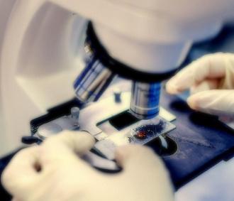 Лечить грипп солодкой иЭболу камфорой предлагают новосибирские учёные
