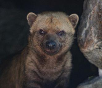 Топ-10 животных Новосибирского зоопарка, которых редко где ещё увидишь