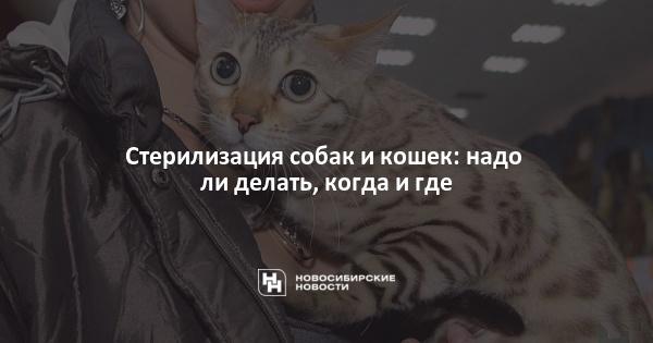 Стерилизация собак и кошек: надо ли делать, когда и где